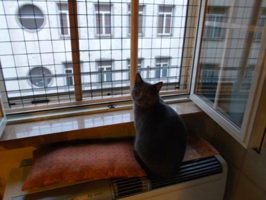 Protezione finestra